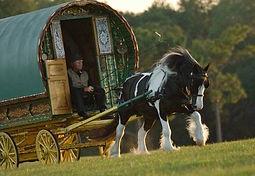 Old Grist Mill Farm, Gypsy Vanner, Gypsy Cob, Old Grist Mill Farm, Lee LaRochelle, Horses for sale, Gypsy
