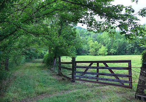 Old Grist Mill Farm, Gypsy Vanner Breeder, Gypsy Horses, Gypsy Vanner, Gypsy, Estill Co., Kentucky