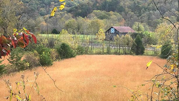 Fall at Old Grist Mill Farm, Old Grist Mill Farm, Gypsy Vanners, Lee Larochelle, Horse, For Sale,Lexington, Richmond, Irvine, Ravenna, Kenucky