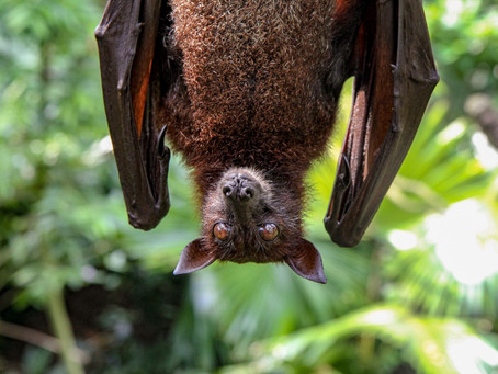 COVID-19: Why It's Important to Stop Vilifying Bats