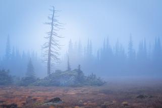 Tonquin Mist