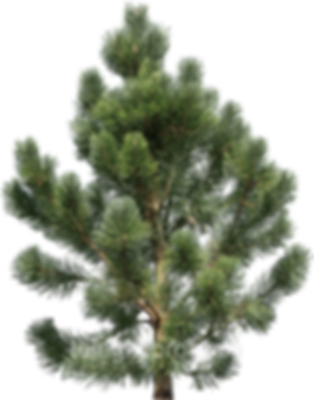 kisspng-pine-fir-tree-clip-art-5adbcca70
