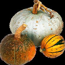 kisspng-cucurbita-maxima-pumpkin-vegetab