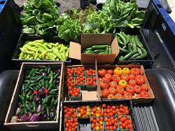 veggies_in_boxes