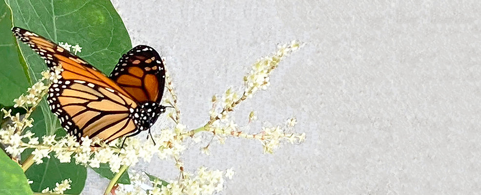 butterfly_wixpix.jpg