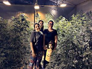 Uso de cannabis para fins médicos dispara na quarentena