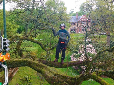 Our first post - how we train as arborists