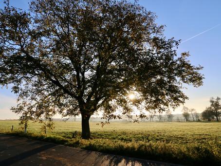 Tree Preservation Orders