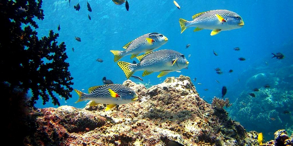 Marine Biology Webinar 6: Why fisheries and coral reef conservation need to go hand in hand