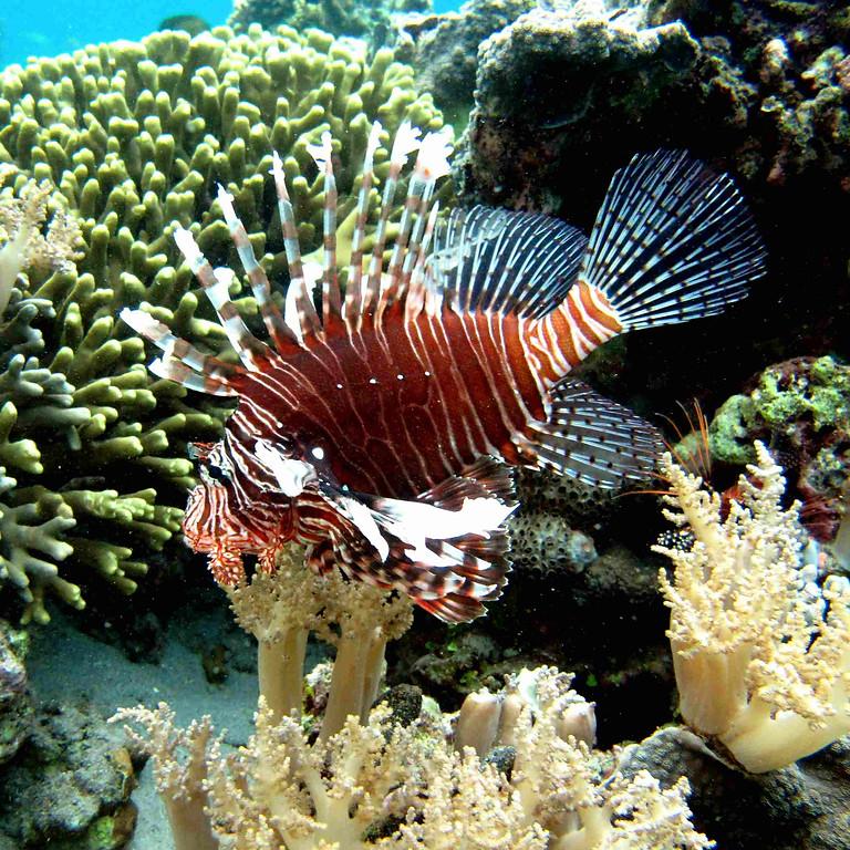 Marine Biology Webinar 7: Citizen Science in Marine Bioinvasion Research