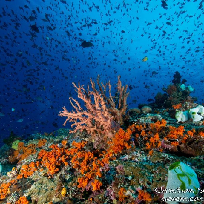Marine Biology Webinar 5: Marine Bioinvasions and the relevance of comprehending local biodiversity