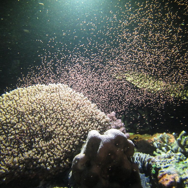 Kick off: Marine Biology Webinar Series
