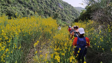 Long Pelion Trail