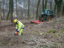 ébranchage travaux forestiers