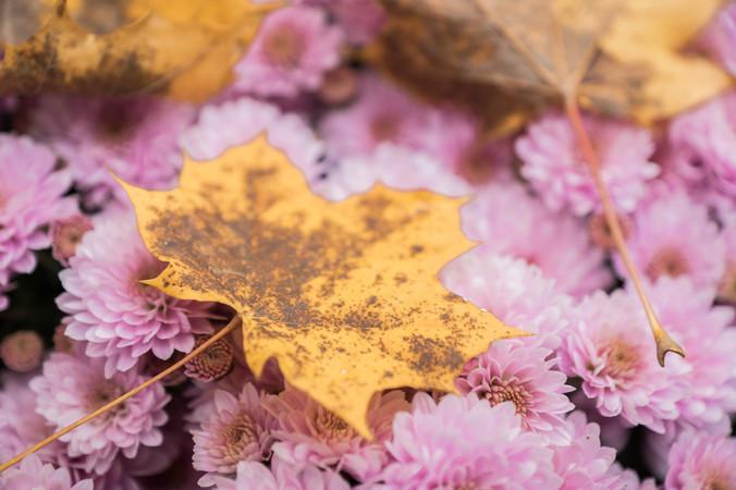 Herbst in Zartrosa - bildhuebsch-blog001