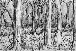 Pencil Drawing Forest.jpg