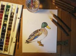 duck photo 2 - 2 logo 2