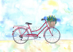 Red Bike / Summer