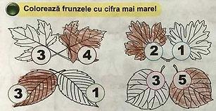 numar-frunze-sm.jpg