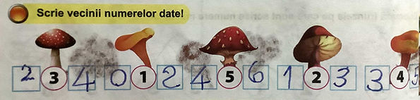 ciuperci-sm.jpg