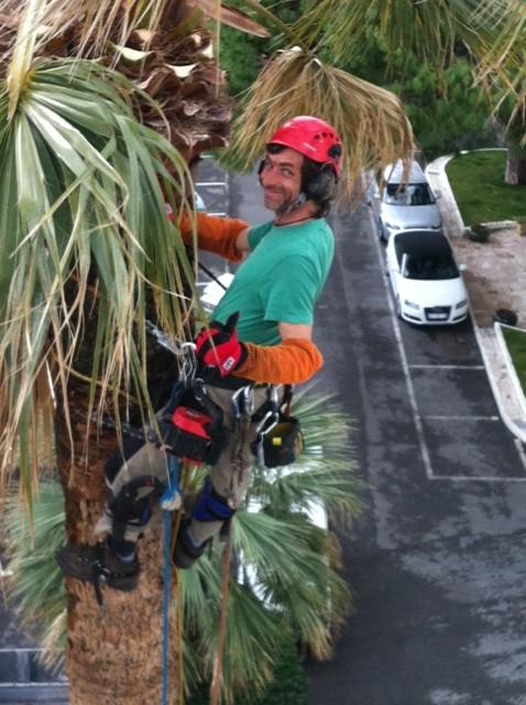 Gilles sur un palmier