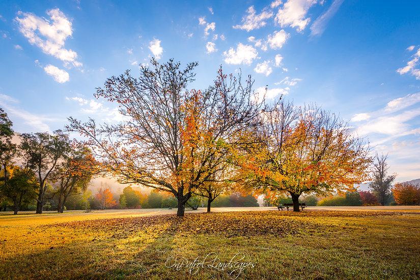 """""""Autumn Arboretum"""""""