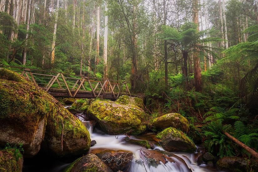 """Toorongo River Footbridge"""