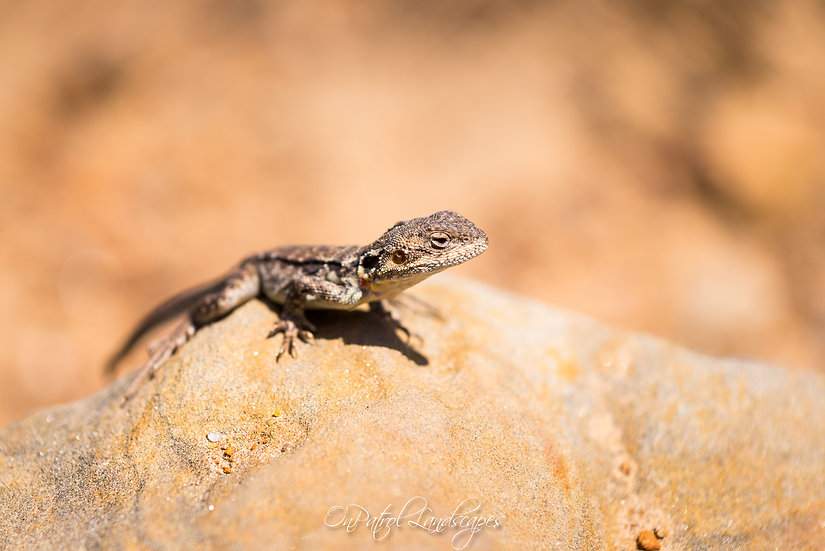 """Curious Lizard"""