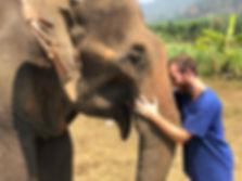 elefante Fabio Chiang Mai.jpg