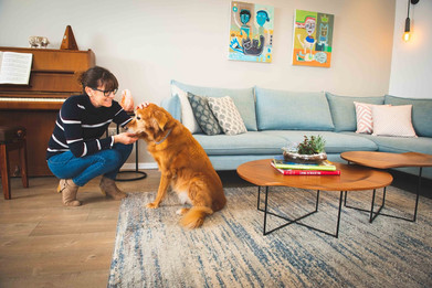הסלון והכלב.jpg