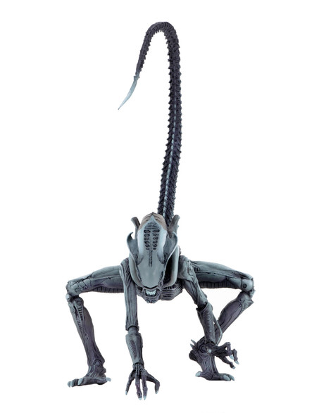 51679-arachnoid2jpg