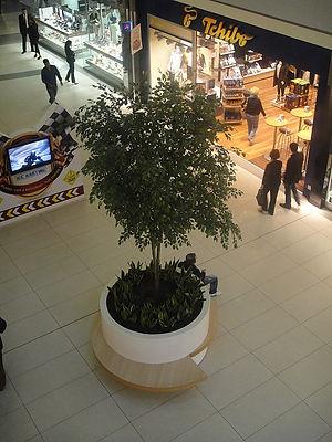 boylu ağaçlar (4).jpg
