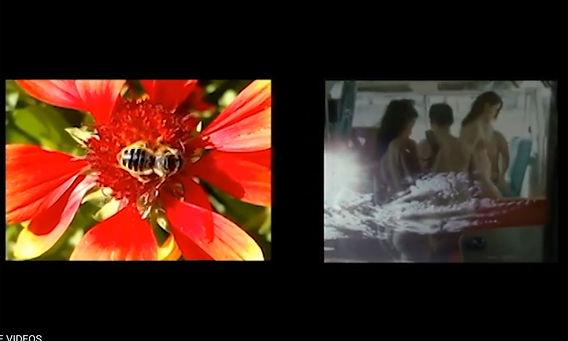 BEE-FREE-rory-wynn-film.jpg