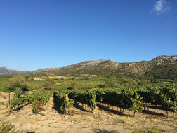 The Vineyards at Embres