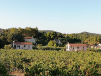 The Villas from the Grenache & Syrah Grape Vines