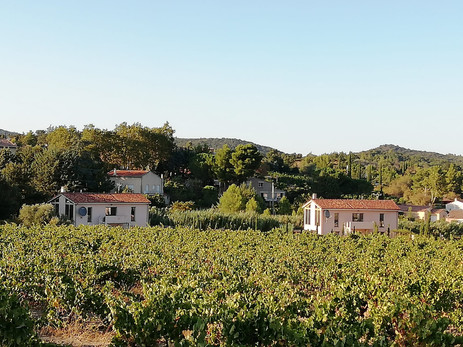The Villas from the Grenache & Syrah Grape Vines