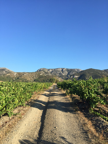 Vineyards in Embres