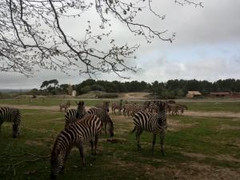 African Reserve at Sigean