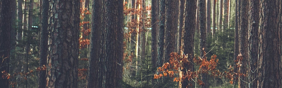 Forest_edited_edited.jpg
