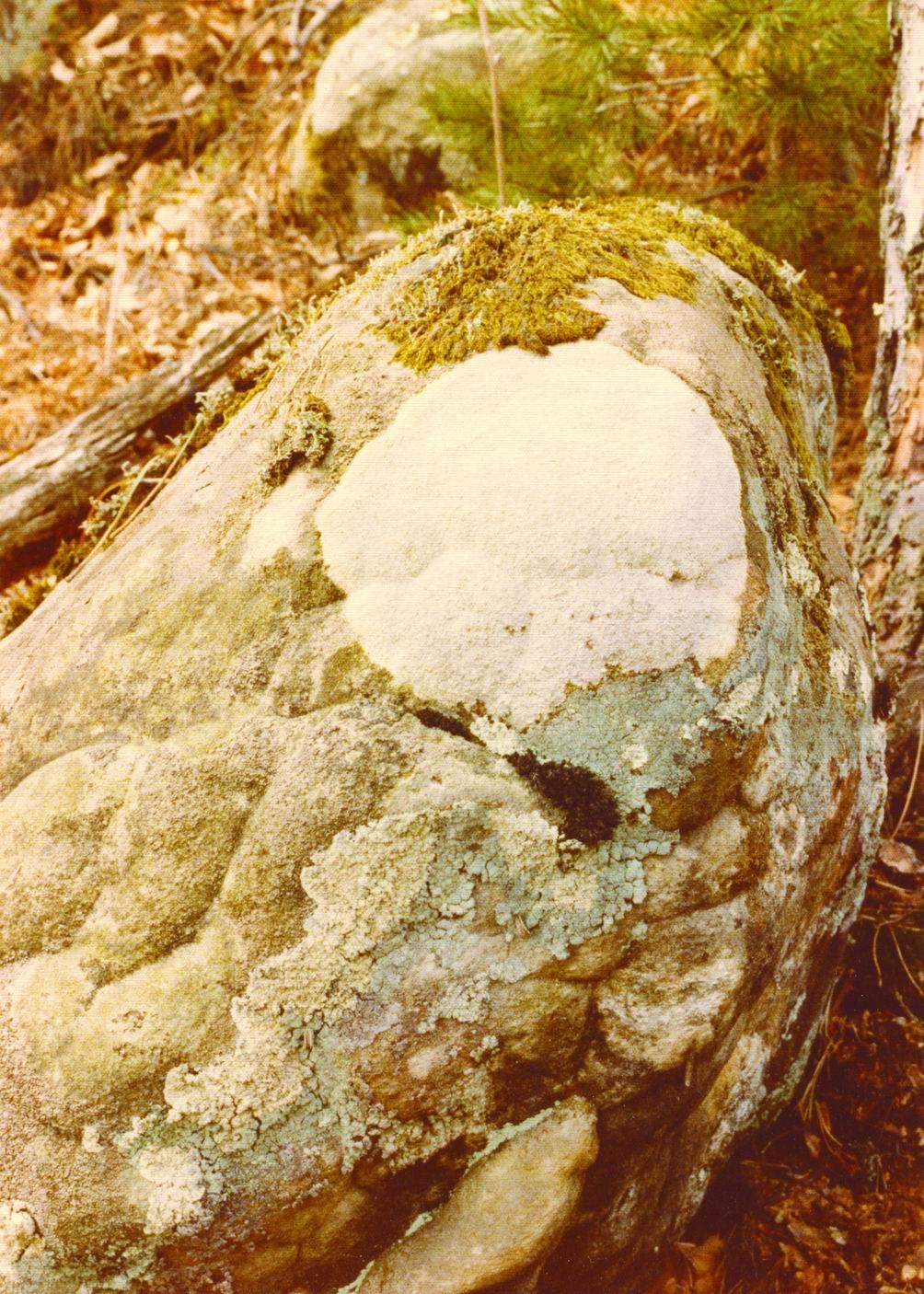 Fontainebleau 6 - 1979.1
