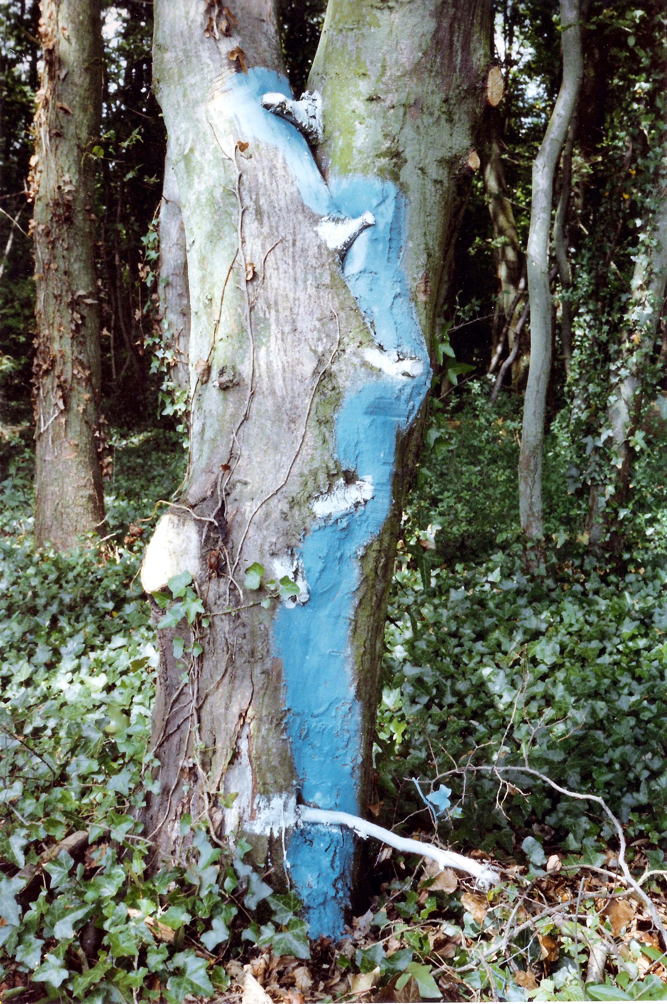 1978 - Pintura sobre árvore - França