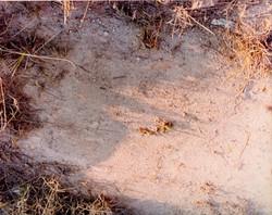 Na mina de caulim.1-1-1980