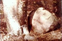 Fontainebleau 9 - 1978.1
