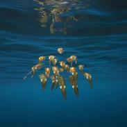 banc de calamars