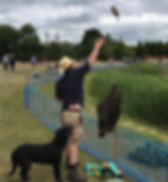 Dummy being thrown at a dog training session