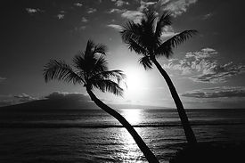 black-and-white-tropical-pierre-leclerc.