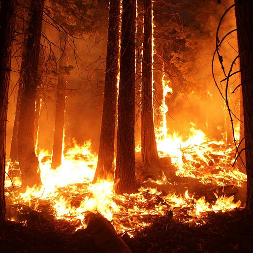 On Sacred Fires
