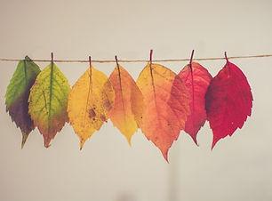 Rainbow of autumn leaves.jpg