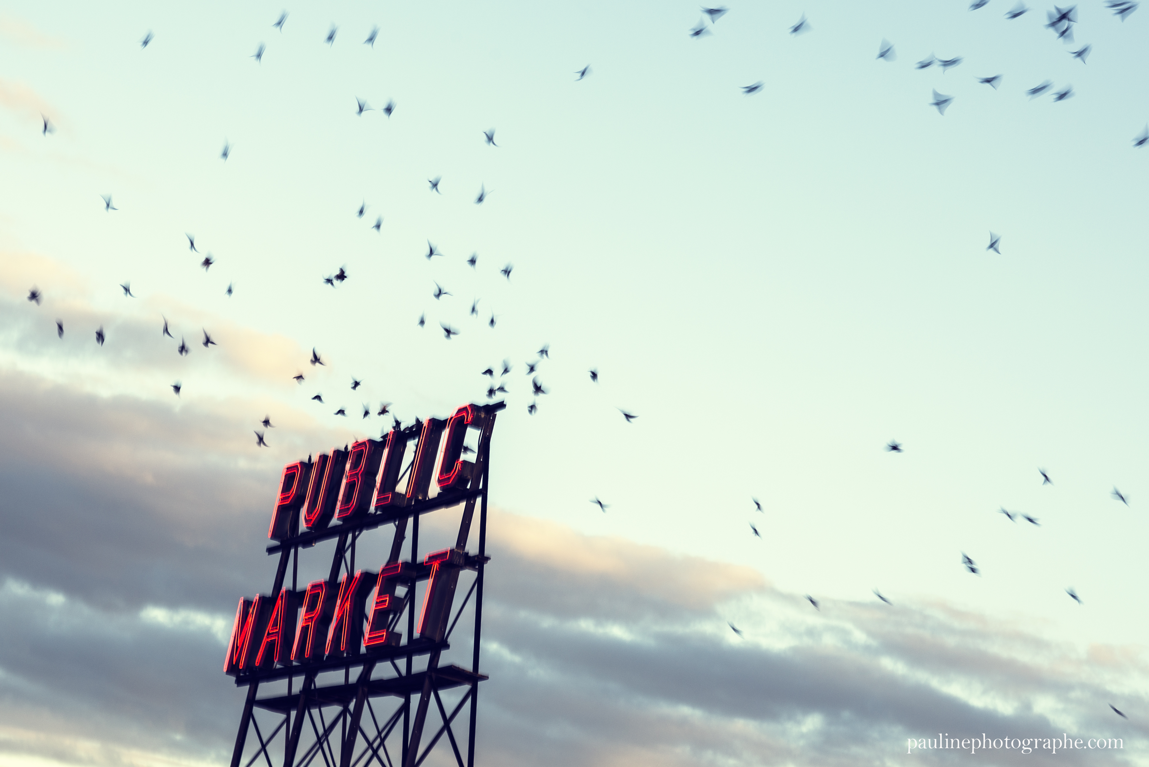 Seattle | Pauline Tezier