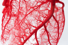 3D-(bio)printed possibility: a Women's Heart